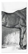 Antique Horse Drawing Beach Towel