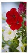 Antique Petunia Flowers Beach Towel
