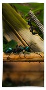 Ants Adventure 2 Beach Towel
