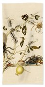 Ants Spiders Tarantula And Hummingbird Beach Towel by Getty Research Institute