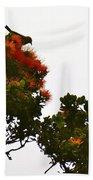Apapane Atop An Orange Ohia Lehua Tree  Beach Towel
