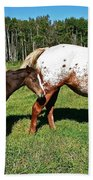 Appaloosa Mamma And Baby Beach Towel