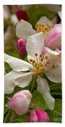Apple Blooms Beach Towel