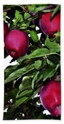 Apple Picking Time Beach Towel