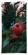 Apple Sunset Beach Towel