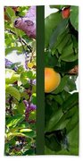 Apples And Apricots Beach Towel by Will Borden