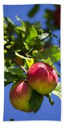 Apples On Tree Beach Towel