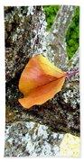 Apricot Leaf And Lichen Beach Towel