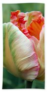 Apricot Parrot Tulip Beach Towel