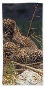 Arabian Leopard Panthera Pardus Cubs Beach Towel
