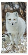 Arctic Fox Beach Towel