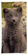 Arctic Fox Pup Alaska Wildlife Beach Towel