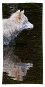 Arctic Wolf In Pond Beach Towel