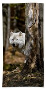 Arctic Wolf Picture 242 Beach Towel