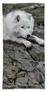 Arctic Wolf Pictures 1142 Beach Towel