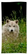 Arctic Wolf Pictures 1172 Beach Towel