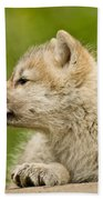 Arctic Wolf Pictures 340 Beach Towel