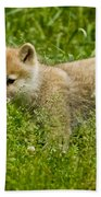 Arctic Wolf Pictures 341 Beach Towel
