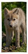 Arctic Wolf Pictures 345 Beach Towel