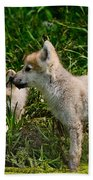 Arctic Wolf Pictures 347 Beach Towel