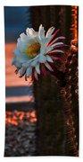 Argentine Cactus Beach Towel