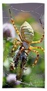 Argiope Spider And Grasshopper Vertical Beach Towel