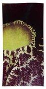 Aristolochia - Dutchmans Pipe Beach Towel