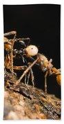 Army Ant Carrying Cricket La Selva Beach Towel