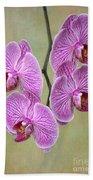 Artsy Phalaenopsis Orchids Beach Towel