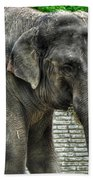 Asian Elephant  0a Beach Towel