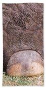 Asian Elephant Foot Beach Towel