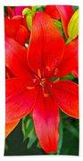 Asiatic Hybrid Lily Beach Towel