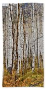 Aspen And Ferns Beach Towel