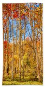 Aspen Fall Foliage Portrait Red Gold And Yellow  Beach Towel