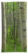 Aspen Forest In Spring Beach Towel