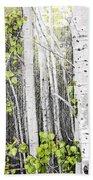 Aspen Grove Beach Towel by Elena Elisseeva