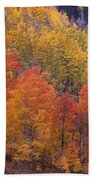 Aspen Grove In Fall Colors Beach Towel