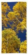 Aspen Grove In Fall Beach Towel