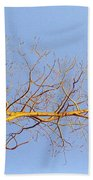 Aspen In The  Autumn Sun Beach Towel
