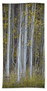 Aspen Stand Beach Towel