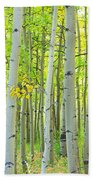 Aspen Tree Forest Autumn Time  Beach Towel