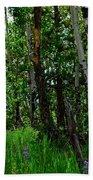 Aspen Trees Beach Sheet