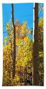 Aspen Trees In Fall Beach Towel