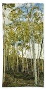 Aspen Trees In Spring  Beach Towel