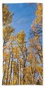 Aspen Trees In The Fall Beach Towel