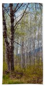Aspen Trees Proudly Standing Beach Towel by Omaste Witkowski