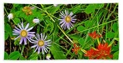 Asters And Scarlet Paintbrush On Swan Lake Trail In Grand Teton National Park-wyoming  Beach Towel