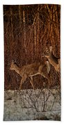At The Edge Of The Woods Beach Towel