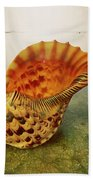 Atlantic Trumpet Triton Shell Beach Towel