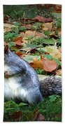 Attentive Squirrel Beach Towel